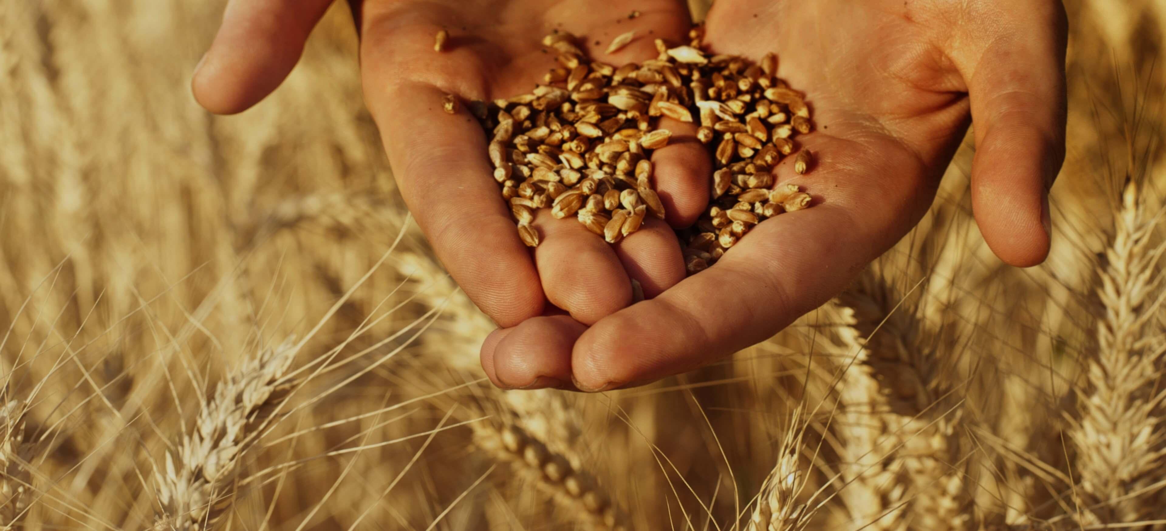 Fabricant de Brosse, Nettoyeurs et Trieurs à grain